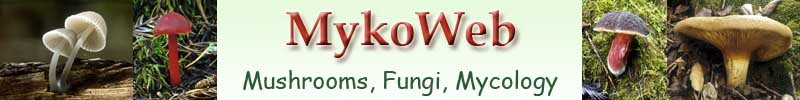 MykoWeb: Mushrooms, Fungi, Mycology